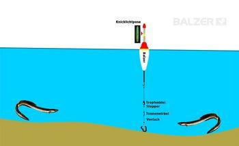 BALZER - Aalangeln - Posenmontage