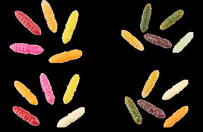 Trout Larva